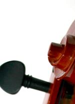 violinsnäcka